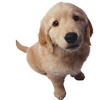 Puppy! Photographic Print