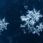 Snowflakes Keep Falling In My Dreams by MaeBelle