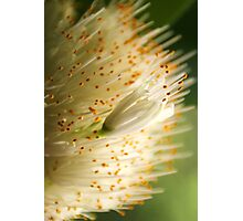 Golden Sparkles Photographic Print