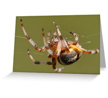 Spin that Web! Greeting Card