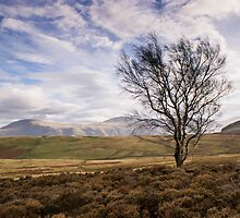 Single Tree, Looking for Friend by George Davidson