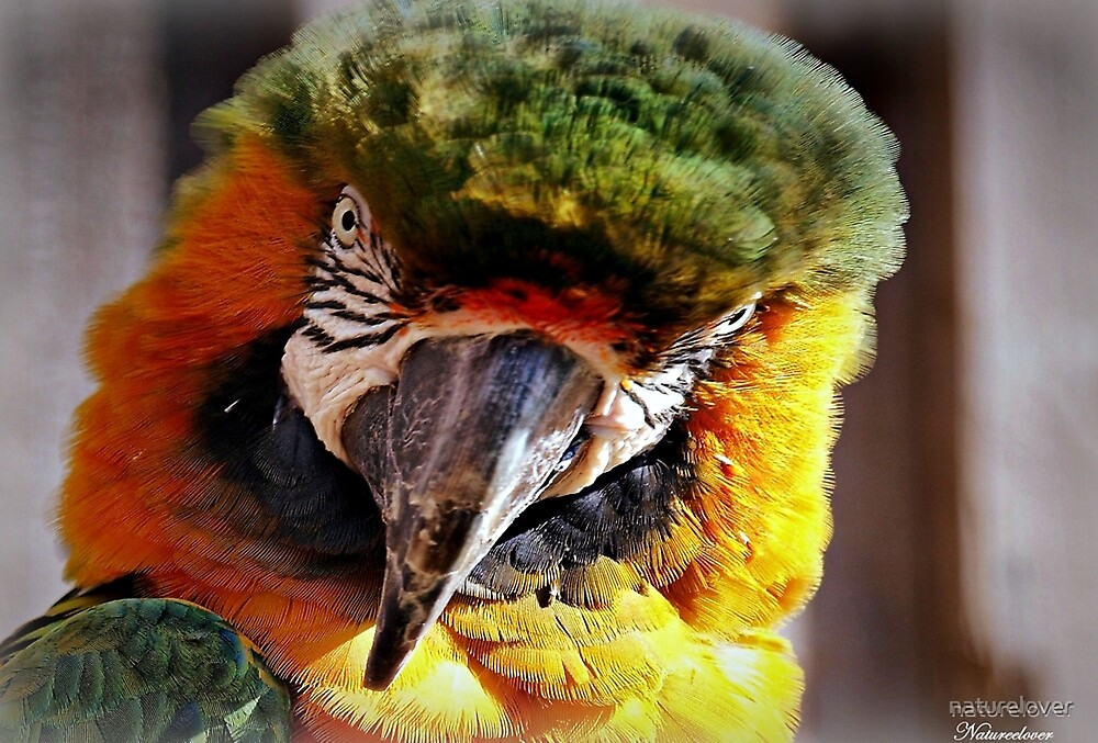 Watch The Birdie.... by naturelover