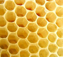 honey comb by Ana Tatu