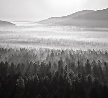 Misty forest by Nigrita