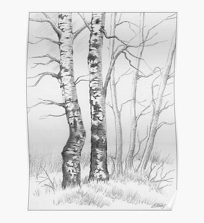 BIRCH TREE 01 Poster
