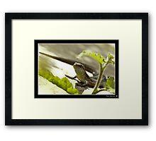 Sunlounging Lizard Framed Print