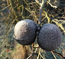 Frozen Pods by Goudy
