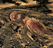 Wild Otter At Waterhead, Windermere by Linda Lyon