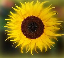 Sunflower Bizarrius Photoshopii by Colin Metcalf