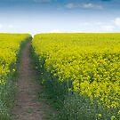 Summer Fields by Paul Benjamin