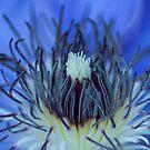 Purple Flower Crop by Paul Benjamin