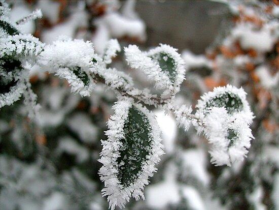 Ice lace by Ana Belaj