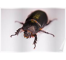 African Black Beetle Poster