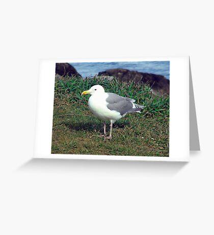 Seagull (4) Greeting Card