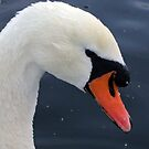 Portrait of a swan by Matthias Keysermann