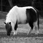 Miniature Horse by Renee D. Miranda