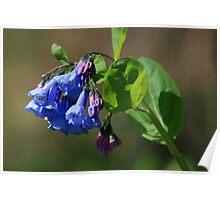 Riverbank Wildflowers Poster