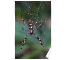Banana Spider Poster