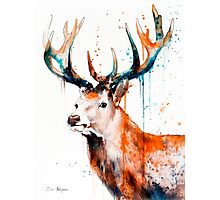 STAGS Photographic Print