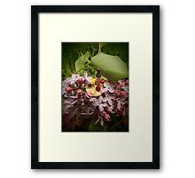 Lilac Wine. Framed Print