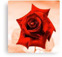 Red Rose III Canvas Print