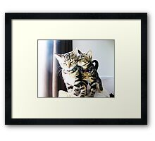 Cat Trouble! Framed Print