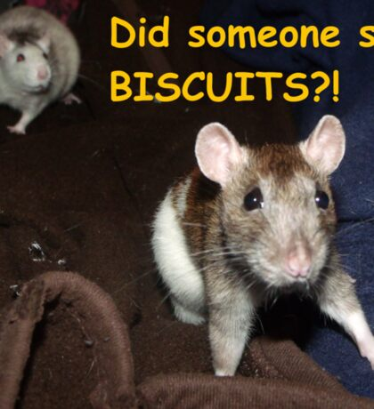 did someone say biscuits? Sticker