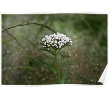 Irish Wild Flower Poster