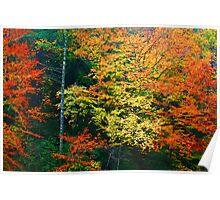 TREES ALONG LITTLE RIVER Poster
