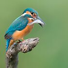 Common Kingfisher Catched The Fish by Sergey Ryzhkov