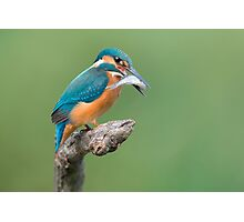 Common Kingfisher Catched The Fish Photographic Print