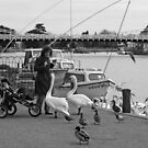 Swans attack! by Irina Chuckowree