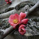 When stones blossom by Irina Chuckowree