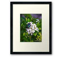 Beetle Beauty  Framed Print