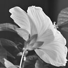 winter blossom by MarieG