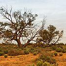 Kinchega Tree #2 by Heath Carney