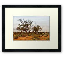 Kinchega Tree #2 Framed Print