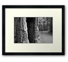 Glacier Trail Framed Print