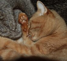 Happy & snug in his faux-fur nest - Minxi 2011 by Penny V-P
