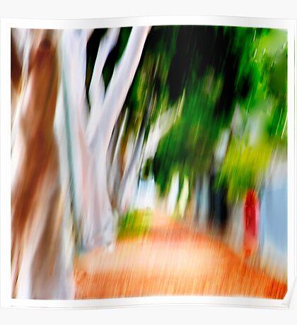 The Eucalyptus Avenue Poster