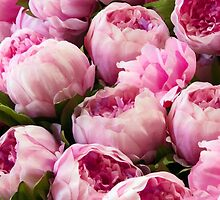 Peonies In Pastel by phil decocco
