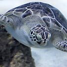 Sea Turtle by SuddenJim