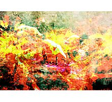 Sheep of Flame Photographic Print