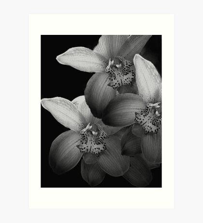 Silver Orchids Art Print