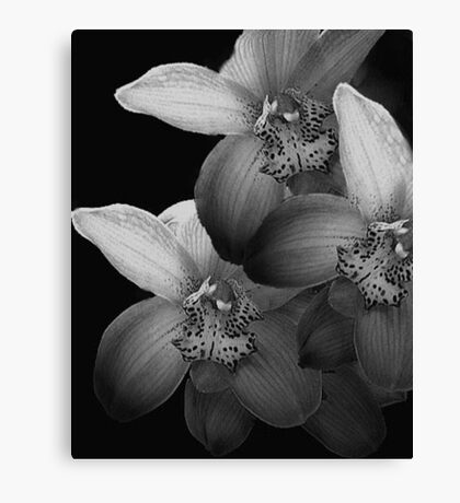 Silver Orchids Canvas Print