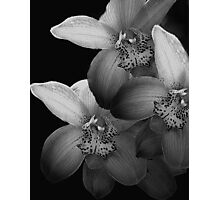 Silver Orchids Photographic Print