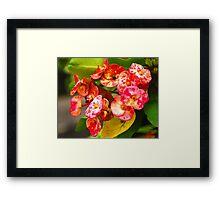 Freshness Framed Print