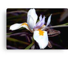 Wild iris with pods Canvas Print