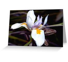Wild iris with pods Greeting Card