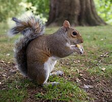 Squirrel by DuncanAllan